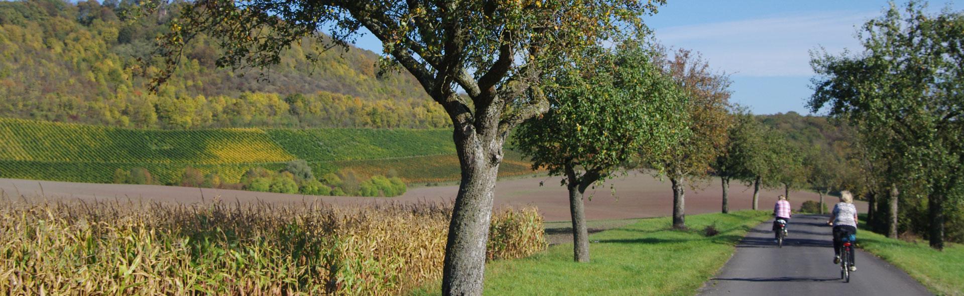 Herbstzeit in Iphofen