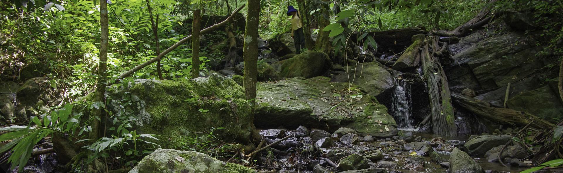 Der Mae Sakut Trail – Acht Pfoten und drei Wasserfälle