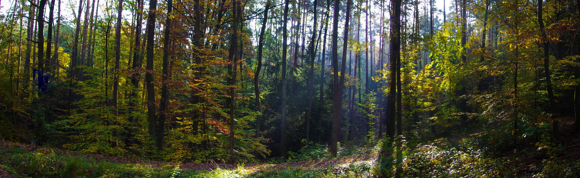 Zeitloser Herbst im Steigerwald