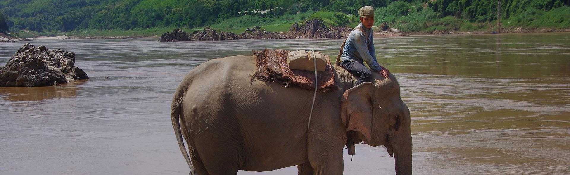 Elefantenjagd in Laos
