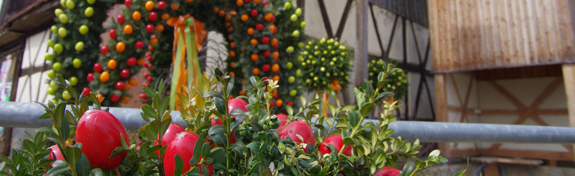Frühlingsblumen um Breitenlesau