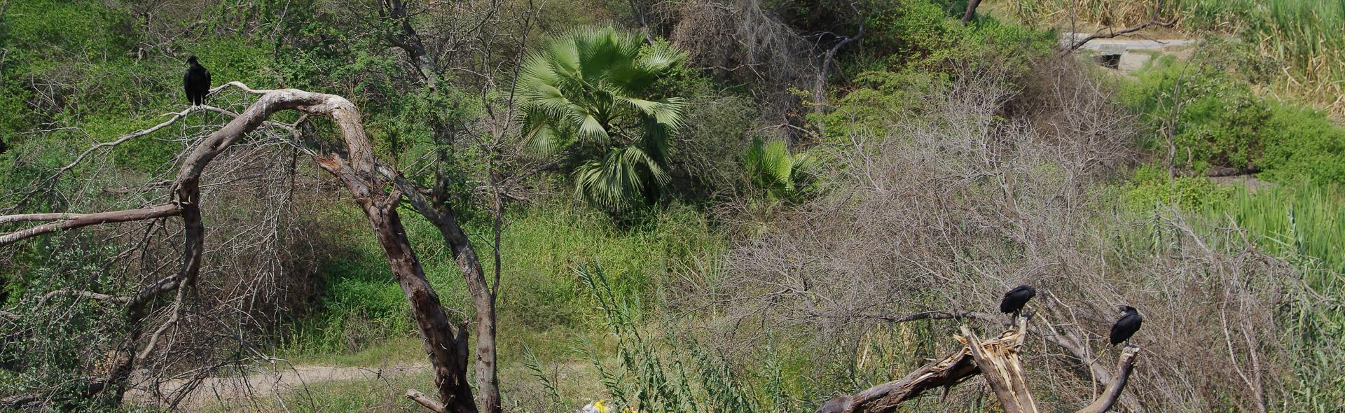 Die schwarzen Geier von Huaca Rajada